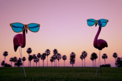 Flamingos even become drafted into the pink cause.